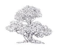 Gammal foliar bonsai Royaltyfria Bilder