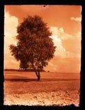 gammal fotografistil Arkivbilder
