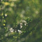 Gammal fotolins med härlig bakgrund och cirklar - bokeh orange tree för bakgrundsblomninglövverk mot bakgrund field blåa oklarhet Arkivfoto