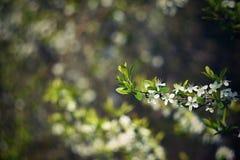 Gammal fotolins med härlig bakgrund och cirklar - bokeh orange tree för bakgrundsblomninglövverk mot bakgrund field blåa oklarhet Fotografering för Bildbyråer