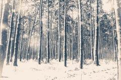 gammal fototappning Trädet sörjer granen i magisk skogvinter Arkivbild
