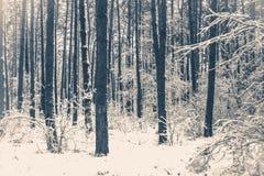 gammal fototappning Trädet sörjer granen i magisk skogvinter Arkivfoto