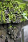 Gammal framsidastaty som är bevuxen med grön mossa arkivfoton