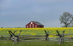 Gammal Gettysburg ladugård med stångstaketet och gulingsenap som växer i förgrunden royaltyfri foto