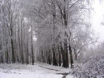 Gammal gränd i vit frost Arkivfoton