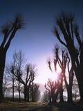 Gammal gränd med klippta lindar Stigning Sun royaltyfria foton
