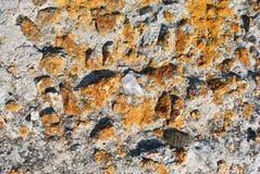 Gammal grå betongvägg med den gula mossaexponeringsglasstenen, grungetextur arkivbilder