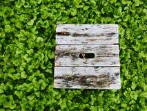 Gammal grå färgbänk som omges av mass av gröna ogräs Royaltyfri Foto