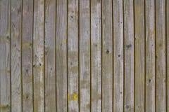 Gammal grå wood vägggräsplan Arkivbilder