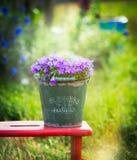 Gammal grön hink med trädgårds- klockablommor på röd liten stol över sommarnaturbakgrund arkivfoton