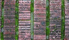 gammal grön moss för tegelstenar Arkivfoto