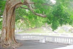 gammal grön plumeriaträdtunnel fotografering för bildbyråer