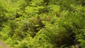 Gammal grön skog, buskar, gräs, på mossaträd, 4K arkivfilmer