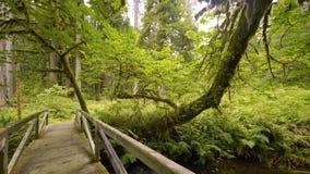 Gammal grön skog som täckas med mossa, med en träbro över sjön, 4k arkivfilmer