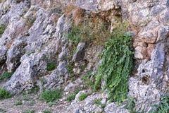 Gammal gropig textur av en forntida stenvägg med plantgrass Arkivbild