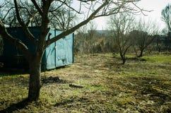 Gammal gunga för barn` s på ett träd parkerar in Arkivfoto