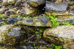 Gammal härlig stenvägg i regnigt väder Arkivbilder