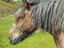 gammal häst Arkivbilder
