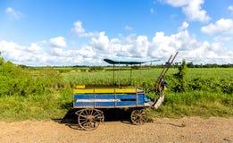 Gammal hästvagn nära Santa Clara Arkivbilder