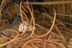Gammal Hosepipe för tappning på smutsig konkret jordning med sugrör - smutsig övergiven feg Coop arkivbild