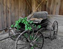 Gammal häst tecknad buggy. Arkivfoto