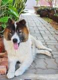 Gammal hund Arkivbild