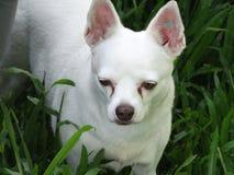 gammal hund Fotografering för Bildbyråer