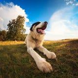 Gammal hund i berg Fotografering för Bildbyråer