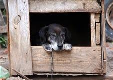 Gammal hund i en hundkoja Arkivfoto