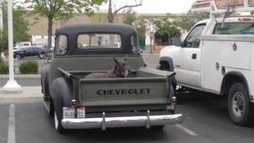 Gammal hund, gammal lastbil arkivfoton