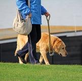Gammal hund på walkies Royaltyfri Fotografi