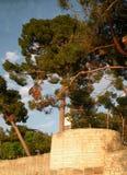 Gammal Istrian stad av Novigrad, Kroatien En härlig kyrka med ett högt elegant klockatorn, stenar gränder och det gamla medelhavs arkivfoto