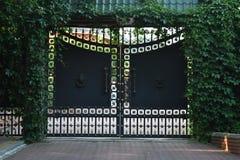 Gammal järnprydnadport och staket som är bevuxna med den gröna parthenocissusen arkivbild