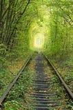 Gammal järnväg linje Naturen med hjälpen av träd har skapat en unik tunnel Tunnel av förälskelse - underbart ställe som av nature Royaltyfria Bilder