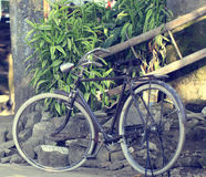 Gammal Java cykel Arkivfoton