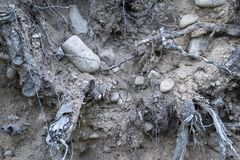 Gammal jord med stenar och växten rotar Royaltyfri Bild