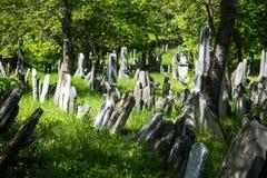 Gammal judisk kyrkogård, stengravstenar, stad av Mikulov Arkivfoton