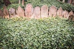 Gammal judisk kyrkogård i Trebic, tjeck Royaltyfri Bild