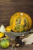 Gammal kökskalagrönsak Höstskörd av pumpor halloween förbereda sig trädgårds- växande home grönsaker Royaltyfria Bilder