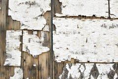 Gammal kanstött vit skälltextur med häftklamrar på bruna träplankor royaltyfri bild