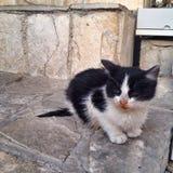 gammal katt Royaltyfria Foton