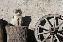 gammal katt Arkivfoto