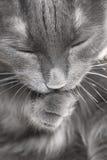 gammal katt Arkivbilder