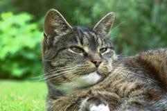 gammal katt Fotografering för Bildbyråer