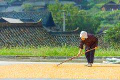 Gammal kinesisk kvinnlig bonde Drying Corn Village Royaltyfri Foto