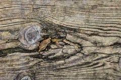 Gammal knuten rutten sprucken golvtiljatextur - detalj Royaltyfria Foton