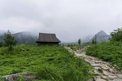 Gammal koja på bakgrunden av stora maxima Gasienicowa dal Tatra berg poland arkivfoton