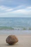 Gammal kokosnöt på stranden Arkivbild