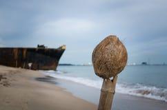 Gammal kokosnöt på stranden Arkivbilder