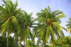 gammal kokosnötdesigngrunge gömma i handflatan retro stil för vykort Arkivbilder